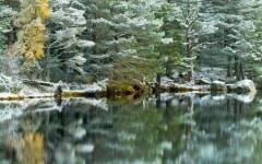 Loch Garten in winter, Cairngorms