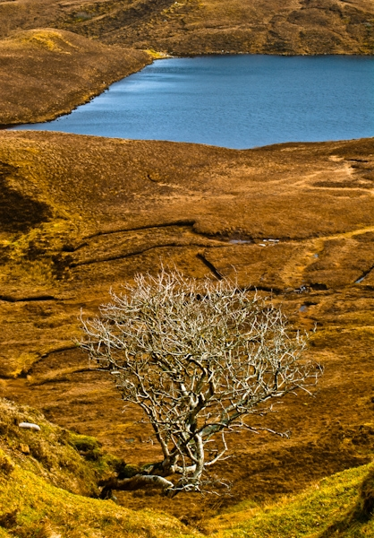 The Quiraing, Skye, lone tree