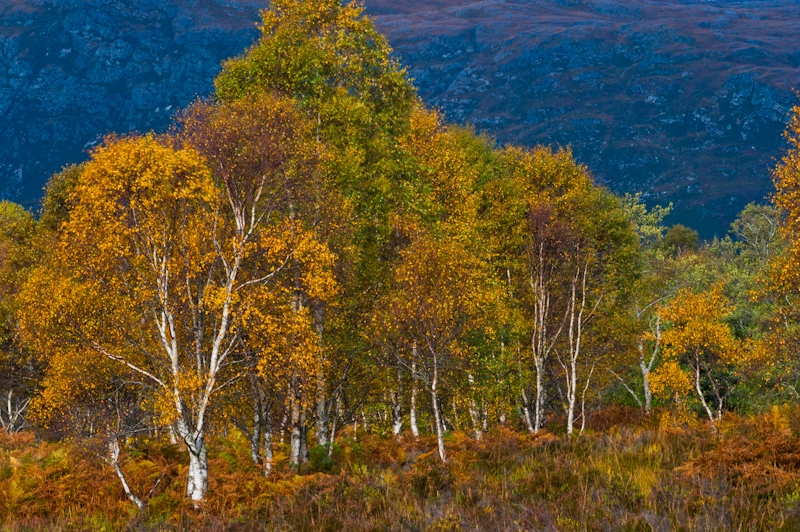 Autumn colours, Glen Torridon