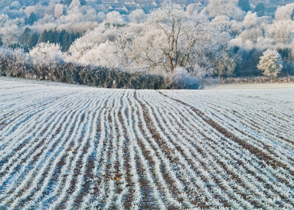 Frozen Field, Cotswolds